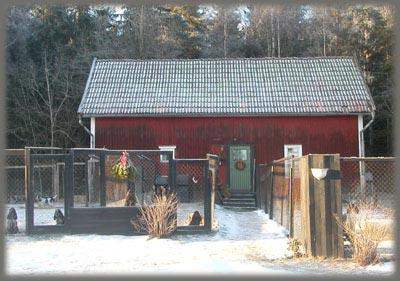 Doghouse, winter